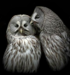 2 beautiful owls
